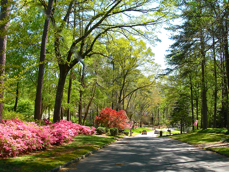 The Sandy Springs Forest Initiative